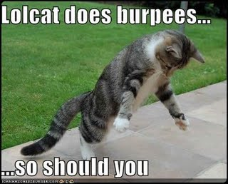Ultimate Cat Burpee ~