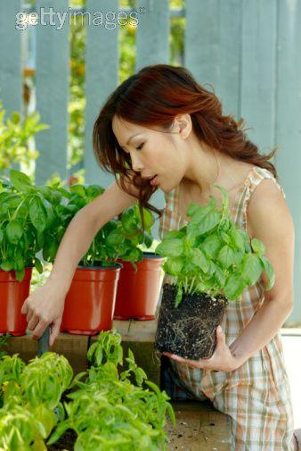 Savoring Healthy Herbs